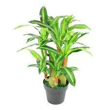 75 cm árbol de Planta Artificial Dracena yuca-Exótico En Maceta Para El Hogar Y La Oficina