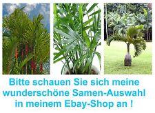 Palmen-Samen-Spar-Set: Pempa-, Siegellack- und Spindelpalme - super !