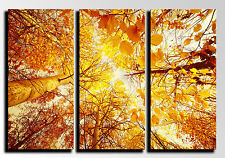 Cuadro Moderno Fotografico base madera, 87 x 62 cm, Bosque Hojas Otoño