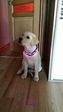 Flashing LED Nylon Pet Cat Dog Night Safety Collar - Pink Small