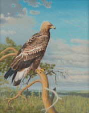 Matti Karppanen Eagle Canvas Print 16 x 20   #3722