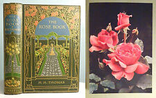 1914 The Rose Book H. H. Thomas BEAUTIFUL DECORATIVE Nature Gardening ANTIQUE