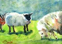 Three Sheep : Signed LE Art Print Suitable for Framing : Sandra Watercolors™