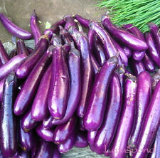 Liveseeds - Purple Long Eggplant Seed Garden Edible Vegetable 20 seeds