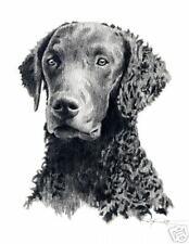 Curly Coated Retriever Dog Pencil Art 11 X 14 Print Djr