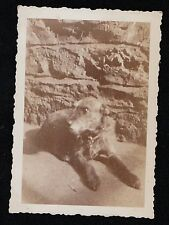 Old Vintage Antique Photograph Adorable Puppy Dog Laying By Stone Wall