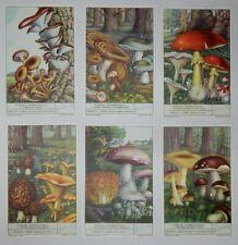 """Liebig Trade Cards - """"Edible Fungus - III"""" - Full Set of 6 - Italian - S1492"""