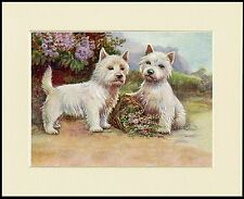 WESTIE WEST HIGHLAND WHITE TERRIER TWO DOGS DOG PRINT MOUNTED READY TO FRAME