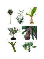 Winterharte Palmen , Bananen , Yucca's , Agaven & Bambus Samen -Sortenauswahl-