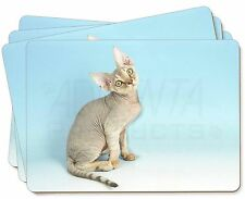 Devon Rex Kitten Cat Picture Placemats in Gift Box, AC-174P