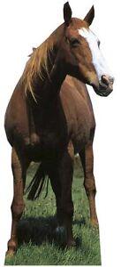 MUSTANG / HORSE - LIFESIZE CARDBOARD CUTOUT / STANDEE Stallion animal