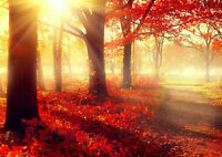 Beautiful Red Autumn Trees Poster Print Size A4 / A3 Forest Poster Gift #8282