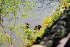 Canadian Bears FOUND PHOTOGRAPH Color CANADA Original Snapshot VINTAGE 98 17 J