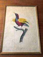"""Jacques BARRABAND / Gravure oiseau """"Le Promefil n°8"""" /Pérée XIXe"""