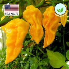 Habanero Lemon Hot Pepper - 50 Seeds - Very Hot NON-GMO Yellow Vegetable Seeds !