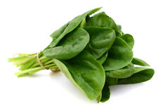 850 SPINACH SEEDS GREEN LEAF VEGETABLES, RARE ITEM THAILAND