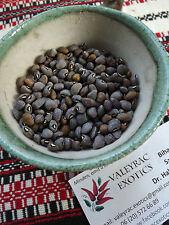 Tetapeche Grey Mottled Cowpea 5+ seeds