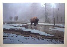 "Daniel SMITH LTD art print ""Yellowstone Procession "" Bison Buffalo MINT COA"