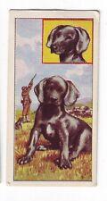 Molassine (Vims Pet) - Puppies (c1967) - No 44 - Weimaraner
