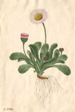 Stampa incorniciata – fiori con radici da Adolf Hitler (REPLICA opera d'arte Foto Art)