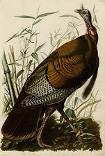 Wild Turkey Audubon Vintage Giclee Canvas Print 20x30