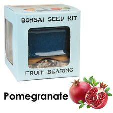 Eve's Pomegranate Bonsai Seed Kit to Grow Pomegranate from Seed