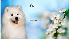 2 Samoyed MBF Car Stickers By Starprint