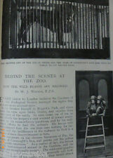 London Zoo Behind Scenes Zoological Society Antique Victorian Photo Article 1899