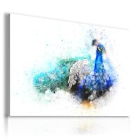 PAINTING DRAWING PEACOCK BIRDS PRINT Canvas Wall Art Picture  R51 UNFRAMED