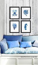 Beach decor Set of 4 unframed Blue Sea Coral Starfish Seahorse Wall art