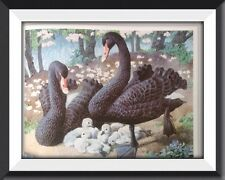 The Black Swan Vintage Print By Tunnicliffe Beautiful Birds Can Be Framed - P2