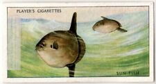 Ocean Sunfish Common Mola Sea Marine 1930s Trade Ad Card