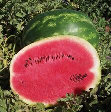 red juicy watermelon : true breed tropical fruit seeds