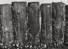 1928 Vintage WOOD GROYNE Mussells Clams Sea Food Photo Art ALBERT RENGER-PATZSCH