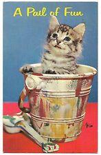 A PAIL OF FUN Tiger Striped KITTEN In a PAINT BUCKET  Vintage Postcard Cat 1966
