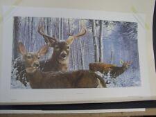 Whitetail Deer Print Bob Travers Winter Whitetails Free Shipping