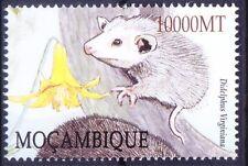 Virginia opossum (Didelphis virginiana) Wild Animals, Mozambique 2002 Mnh