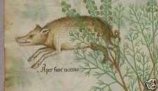"""Los médicos Medieval Libro Antiguo Gran Bretaña Tractatus de hebris Boer impresión 12x7"""""""