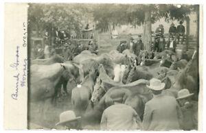 RPPC Real Photo Postcard Bunch Grass Horses Oregon Sale Farm Animals Cowboy Men