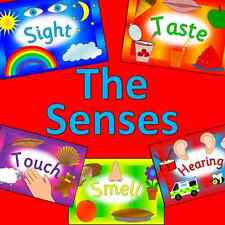 THE SENSES topic resource pack on CD - EYFS, KS1, IWB- Ourselves, All about me