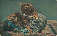 """Pair Of Cats """" At Play"""" Rapid Photo printing card unposted with message"""