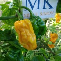 Numex Suave Orange,10 semillas,seeds,Capsicum chinense (373)