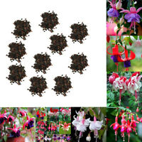 Colorful Rare Fuchsia Flower Home Garden Outdoor Seeds Planting Plant Decoration