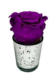 Preserved rose -PLUM PURPLE- In silver mercury glass |long-lasting|eternal|real|