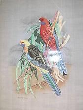 Birds Original Art