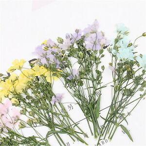 30pcs Multi-Color Assorted Dried Babysbreath Flower Decor DIY Making Accessories