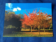 Beech Trees in Autumn Sun - Lewisham Park Art Postcard