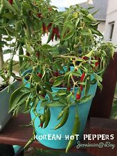 RARE✿ Heirloom Korean Gochu Dark Green Hot Pepper 20 Seeds ●Use Dry/Fresh