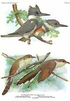 "1936 Vintage FUERTES BIRDS #58 CUCKOO BIRDS, KINGFISHER"" Color Plate Lithograph"