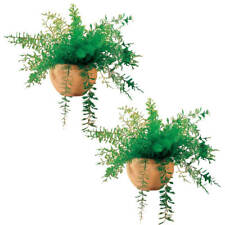 Mysterious Air Fern Set of 2
